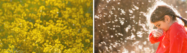 Sneeze-proof your spring