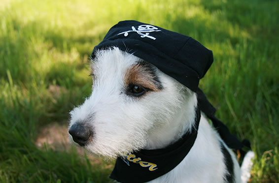 2015_october_article4_slider_1_after_Pirate_Dog