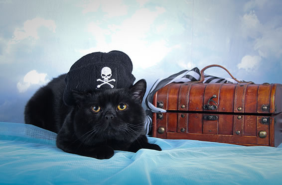 2015_october_article4_slider_1_before_Pirate_Cat