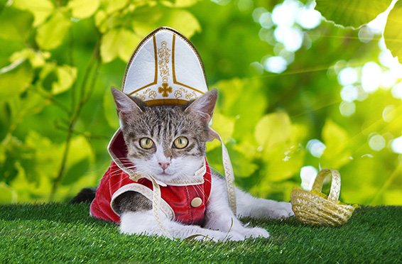 2015_october_article4_slider_2_before_Pope_Cat_v2