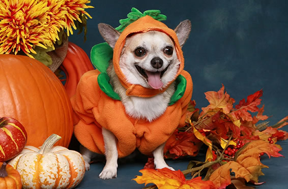 2015_october_article4_slider_4_after_Pumpkin_Dog
