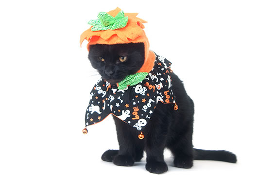 2015_october_article4_slider_4_before_Pumpkin_Cat