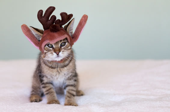 2015_october_article4_slider_7_before_Reindeer_Cat